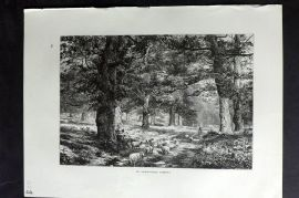 Picturesque Europe 1870s Antique Print. In Sherwood Forest, Notts